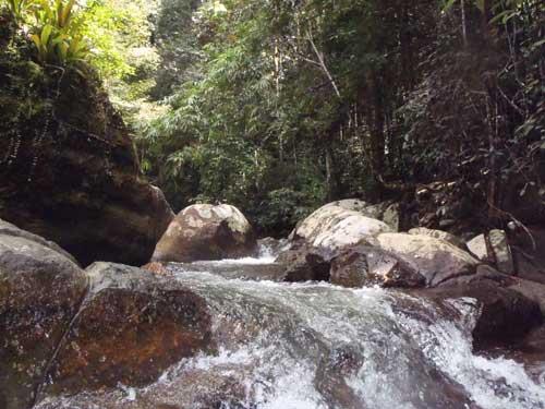 Hutan Lipur Ulu Licin near Bruas