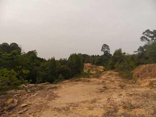 Jungle trekking around Teluk Batik